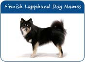 Finnish Lapphund Dog Names