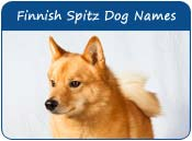 Finnish Spitz Dog Names
