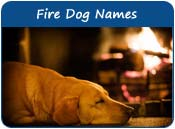 Fire Dog Names