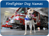 Firefighter Dog Names
