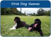First Dog Names