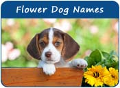 Flower Dog Names