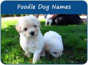 Foodle Dog Names