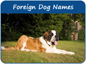 Foreign Dog Names