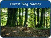Forest Dog Names
