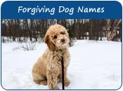 Forgiving Dog Names