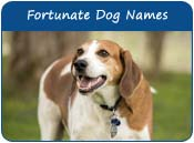 Fortunate Dog Names