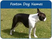 Foxton Dog Names