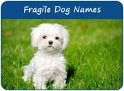 Fragile Dog Names