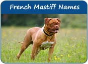 French Mastiff Dog Names