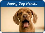 funny dog names the funniest names for puppies page 1