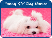 Funny Girl Dog Names