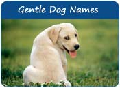 Gentle Dog Names