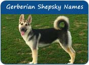 Gerberian Shepsky Dog Names