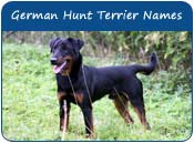 German Hunt Terrier Dog Names