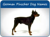 German Pinscher Dog Names