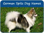 German Spitz Dog Names