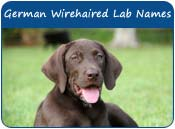 German Wirehaired Lab Dog Names