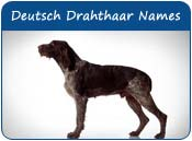 German Wirehaired Pointer Dog Names