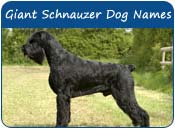 Giant Schnauzer Dog Names