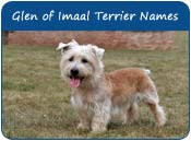 Glen of Imaal Terrier Dog Names