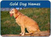 Gold Dog Names