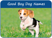 Good Boy Dog Names