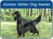 Gordon Setter Dog Names