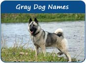 Gray Dog Names
