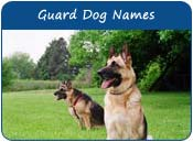 Guard Dog Names