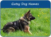 Gutsy Dog Names
