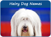 Hairy Dog Names