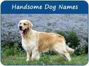 Handsome Dog Names