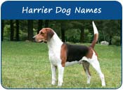 Harrier Dog Names