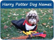 Harry Potter Dog Names