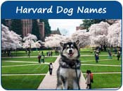 Harvard Dog Names