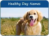 Healthy Dog Names