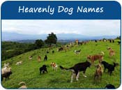 Heavenly Dog Names