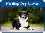Herding Dog Names