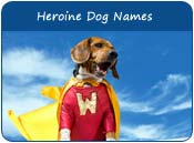 Heroine Dog Names