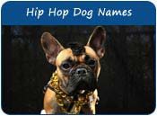 Hip-Hop Dog Names