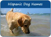 Hispanic Dog Names