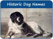 Historic Dog Names
