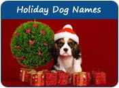 Holiday Dog Names