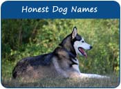 Honest Dog Names