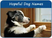 Hopeful Dog Names