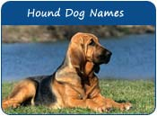 Hound Dog Names
