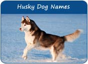 Husky Dog Names