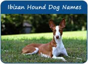Ibizan Hound Dog Names