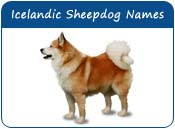 Icelandic Sheepdog Dog Names